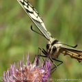 Face to face (2011-09-05 23:18:09)